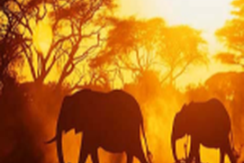 Places to See in Africa
