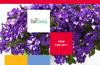GRO GETTER for Windows 8