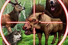 Wild Animal Hunting For Hunters