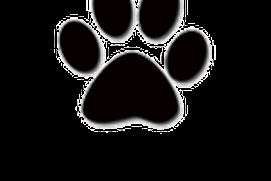 Tallahassee Pet Adoption
