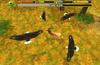 Hunt as a flock!