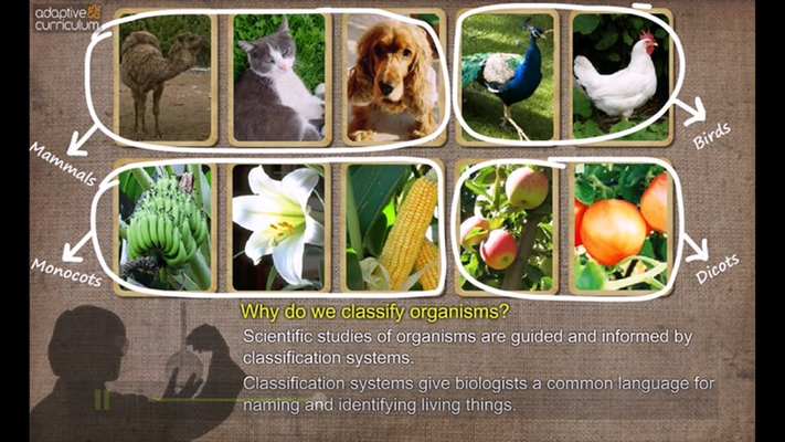 Learn why scientists classify organisms.