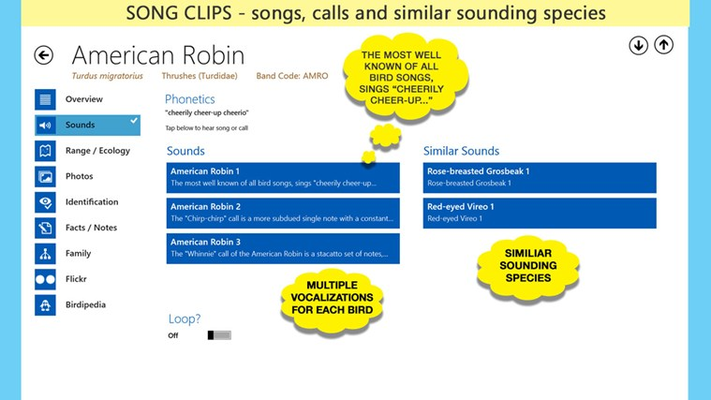 Song Clips: each bird has several vocalizations, phonetics and similar sounding