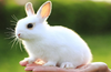 This is a pictures of rabbit