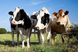 Farm Animal Name Generator