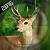 Wild Sniper Hunter