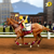 Horse Racing League Pro 2016 - Riding Simulator