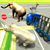 City Zoo Transport Truck 3D