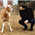 Brian Wilson FANfinity