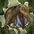Virtual Pet Dinosaur Spinosaurus