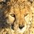 Safari Photo Puzzle