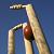 Live Cricket 24X7