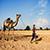 Kutch Desert