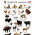 LIST OF ANIMALS